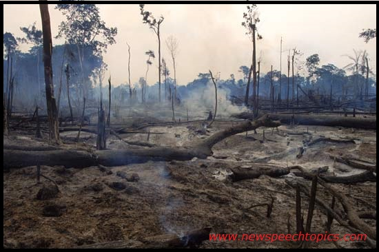 deforestation pollution essay 8 fantastic solutions to deforestation trees play a vital role in protecting our environment in several ways fewer forests mean that the sustainability of our planet.
