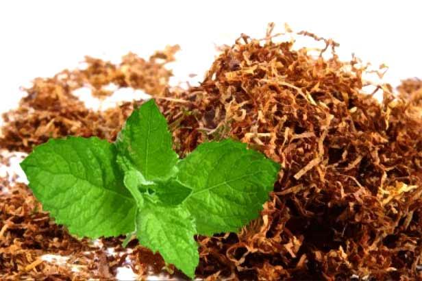tobacco essay intro