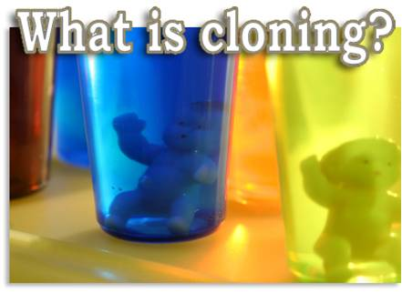 Debate topics on cloning