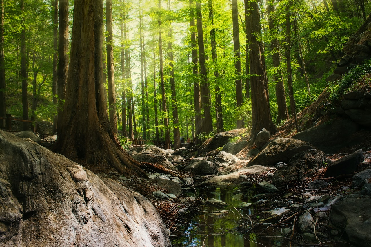 Importance of forest essay writing